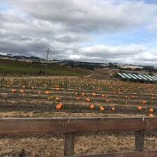Petaluma Pumpkin Patch Corn Maze Map by Pronzini Pumpkin Patch 10 Reviews Pumpkin Patches 3795 Adobe