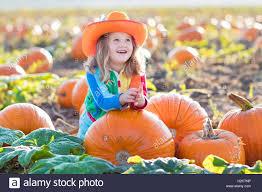 Pumpkin Picking In Ct by Little Picking Pumpkins On Halloween Pumpkin Patch Child