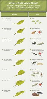 How To Get Rid Of Common Garden Pests | Fix.com How To Keep Mosquitoes Away Geting Rid Of Five Tips For Getting Bugs And Pests On Your Patio Youtube To Get Chiggers Skin Body Yard Symptoms Fast Crawly Catures In My Backyard Alberta Home Gardening 25 Unique Rid Spiders Ideas Pinterest Kill Off Bug Control I Repellent Spiders Spider Spray Sprays Cutter 16 Oz Outdoor Foggerhg957044 The Of Time Tested Bob Vila Pictures With Japanese Beetles Garden Best Indoor Mosquito Killers Insect Cop