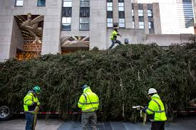 Rockefeller Plaza Christmas Tree Lighting 2017 by 2017 Rockefeller Center Christmas Tree Has Arrived In Nyc Photos