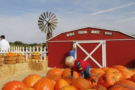 Morgan Hill California Pumpkin Patch by Great Pumpkin Patches In The San Francisco Bay Area Trekaroo