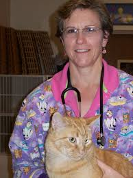 arlington cat clinic arlington cat clinic our doctors