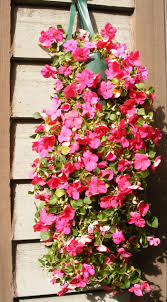 Fertilizer For Pumpkins Uk by Top 10 Plants For Stunning Hanging Baskets Top Inspired