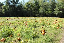 Jacksonville Nc Pumpkin Patch by The Pumpkin Patch At Mike U0027s Farm A Dose Of Pretty