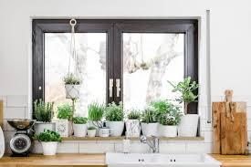 kräutergarten in der küche jungle dreierlei liebelei