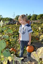 Sunnyside Pumpkin Patch by Our Community The Sherman Oaks Nursery