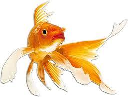 grazdesign wandsticker toilettentattoos goldfisch wasserfeste fliesen aufkleber fisch wandtattoo bad badezimmer wc kinderzimmer 66x50cm