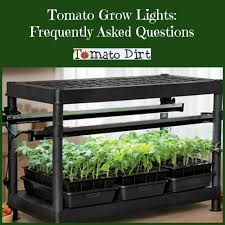 tomato grow lights for seedlings frequently asked questions