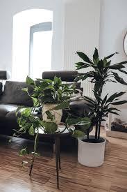 mein dschungel grüne zimmerpflanzen liebe hellopippa