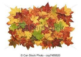Pile Og Vibrant Fall Leaves Stock