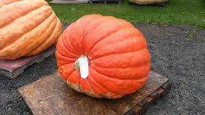 Atlantic Giant Pumpkin Growing Tips by 2016 Seed Pack Annapolis Valley Giant Vegetable Growers