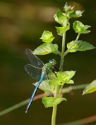 s accroché a la vie photo et image nature macro insectes