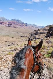 Travel Las Vegas, Nevada: Trucking Up A Mountain On A Horse | Global ... Trucking Trucks Pinterest Rigs Biggest Truck And Kenworth Trucks 2 People Suing Trucking Company Involved In New Mexico Crash Las Mgm Springfield Makes England Debut Cra Inc Landing Nj Rays Truck Photos Rwh Oakwood Ga Goods Transport Services Columbia Pa Some Random Equipment From The Local Usps Contractor Companies Hiring Drivers Driving Fia European Racing Circuit Zolder 092017 Youtube