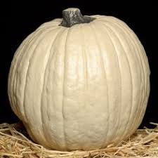 Fake Carvable Foam Pumpkins by Funkin Artificial Carv Able Pumpkin To Reuse Year After Year