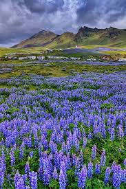 The Fields of Vik Southern Iceland