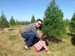 Ticks On Christmas Trees 2015 by Choose And Cut Your Own Christmas Tree Farms In San Antonio And