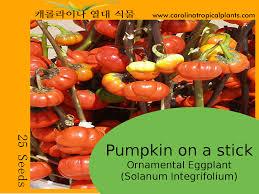 Natural Fertilizer For Pumpkins by Germination Information For Pumpkin On A Stick Seeds Carolina