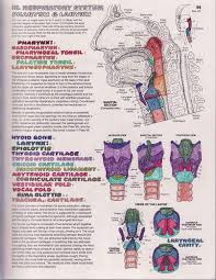 Vocal Anato Image Gallery Best Anatomy And Physiology Coloring Book