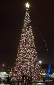 Christmas Trees Types Uk by Britain U0027s Largest Christmas Tree Goes Up In Cheshire Daily Mail