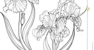 Full Size Of Flowersiris Flower Amazing Free Iris Flowers Coloring Books For Kids Awesome