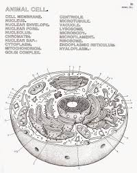 Microbiology Coloring Book Biology Free Pages On Art