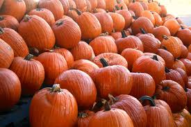 Types Of Pumpkins For Baking by When To Harvest Pumpkins Hgtv