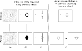 Awareness and Filling in of the Human Blind Spot Linking