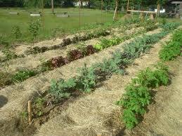 The Sharing Gardens The Benefits of Deep Mulching