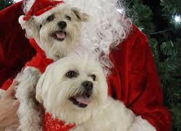 A Very Brisbane Santa Paws | My City Life Wildlife Archives Saving More Pets Aussie Pooch Mobile Dog Wash Grooming Franchise Ph 1300 369 Pet City Mt Gravatt Adoptions Shop Warehouse Buy Supplies Online Petbarn Rspca Accsories Kmart Food Care Home Big W Adopt An Animal Find The Perfect Pet Today Rspca Nsw Best Friends Supercentre