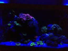 eclairage led pour aquarium eau de mer aquariophilie forum recifal aquarium eau de mer forum redseamax