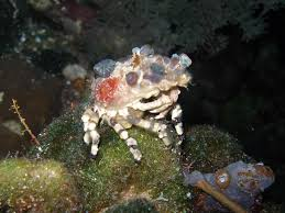 Decorator Crabs And Sea Sponges by Indonesia U002708 More