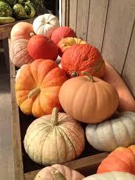 Pumpkin Patches Cincinnati Ohio Area by Burger Farm U0026 Garden Center Cincinnati Ohio U2013