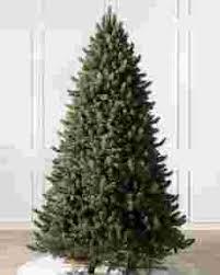 Vermont White Spruce Tree Child 1