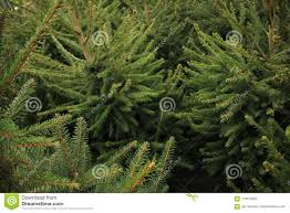 Download Celebrate Christmas Buy A Tree On The Market In Greenhouse Stock