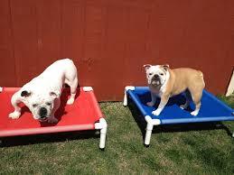 Best 25 Pvc dog bed ideas on Pinterest