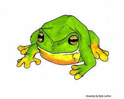 Do Aquatic Dwarf Frogs Shed Their Skin by Stuff For Cool People Pets Frogs And Toads