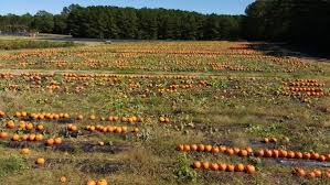 Patterson Pumpkin Patch Nc by The Best Pick Your Own Pumpkins Near Charlotte