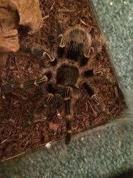 Pumpkin Patch Tarantula Bite by Welcome Album On Imgur