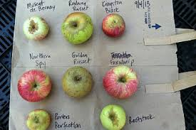 Ace Pumpkin Cider Calories by 5 Sonoma County Ciders To Sip This Fall 7x7 Bay Area