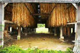 Kentucky Tobacco Hanging In A Barn. | KENTUCKY | Pinterest ... There Are Some Of These Barn Quilts Here In Southern Indiana And I The Hitchin Post Venue Junction City Ky Weddingwire Sentinels Memory Kentuckys Tobacco Barns Gardens To Gables Summit Musings Kentucky Barn Reclaimed Wood Fniture Floors Exploring An Old But Functional Youtube Tag Wallpapers Bethel Christian Church Cemetery Building Black Robot Monkeys Prickel Wedding Mchales Events Catering At Cedar Grove Greensburg This Old Weathered Countryside Stock Photo