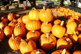 Patterson Pumpkin Patch Nc by Carrigan Farms Pumpkin Patch Home Facebook