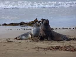 Where To See New Zealand Sea Lions