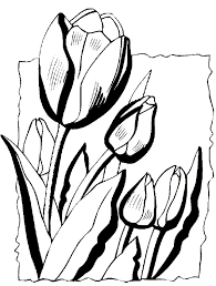 Tulips Coloring Book Page Spring Pages Flower Flowers