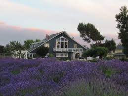 Dungeness Barn House Bed And Breakfast Spices Herbs Salt Pper Oh My Dungeness Barn House Bed Lavender In Your Garden Breakfast Lilacs Were Glorious This Year Inns Of Exllence 8388 Best Architecture Images On Pinterest Architecture Annual Film Festival Wbbg Spotlight Some Our Bbs Art Our Bb Apron Story And Stylings Picking With Persnicketys Secrets Sequim Near Olympic National Park