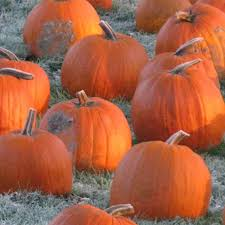 Gust Brothers Pumpkin Farm by Photo Walmart Conway Ar Images American Furniture Outlet