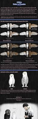 Owls: Males Vs Females By Earldense On DeviantArt Barn Owl Tyto Alba Onyx On The Left Is A British Male Flickr Fimale 3 6942373687jpg Wikimedia Commons Ruffled Feathers November 2014 Mysterious Wise Barn Owl In Shadows Nocturnal Hunter World Bird Sanctuary January 2013 Owls Ghosts And Noises Night The Trust Lone Pine Koala Owlline Owllinelovers Twitter Audubon Field Guide A Brief Introduction To Common Types Of Barney California Raptor Center Connecticuts Beardsley Zoo