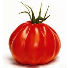 coeur de en pot tomate coeur de boeuf greffée c 0 5l autres marques