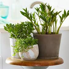 Best Plant For Your Bathroom by Home Dzine Garden Ideas Use Plants To Freshen Up A Bathroom