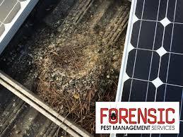 bird sydney forensic pest management services