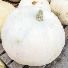 Eden Organic Pumpkin Seeds Where To Buy by Pumpkin Seeds Casper